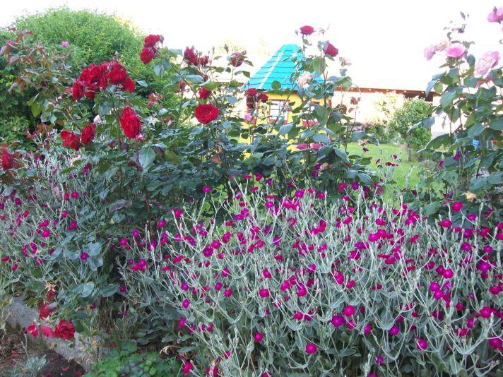 Blumen am Hof